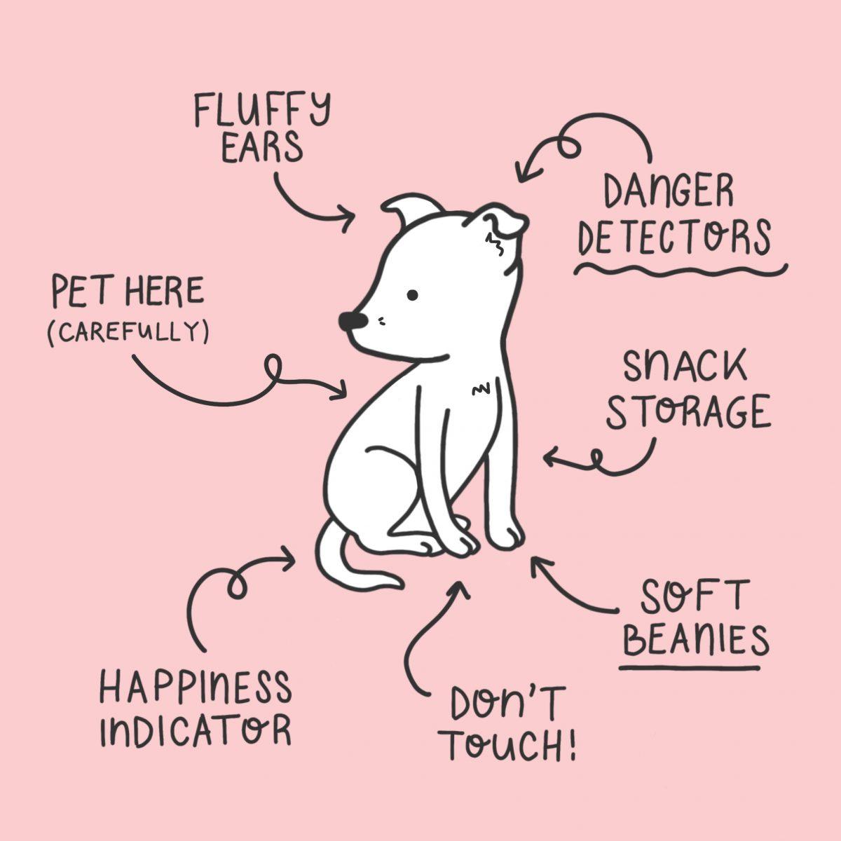 Anatomy of my dog